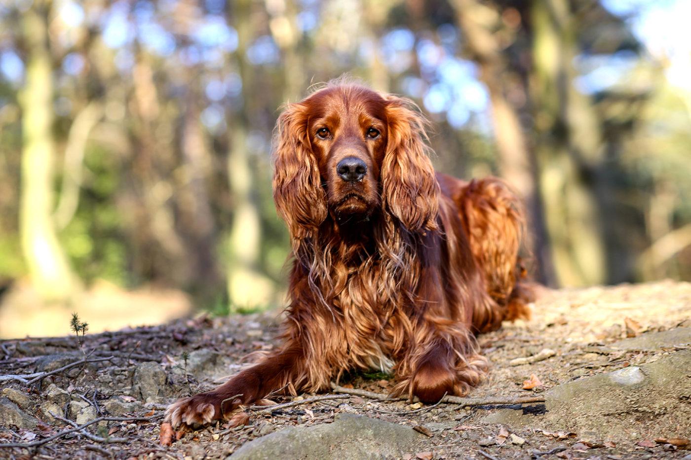 Tierfotografie Hunde