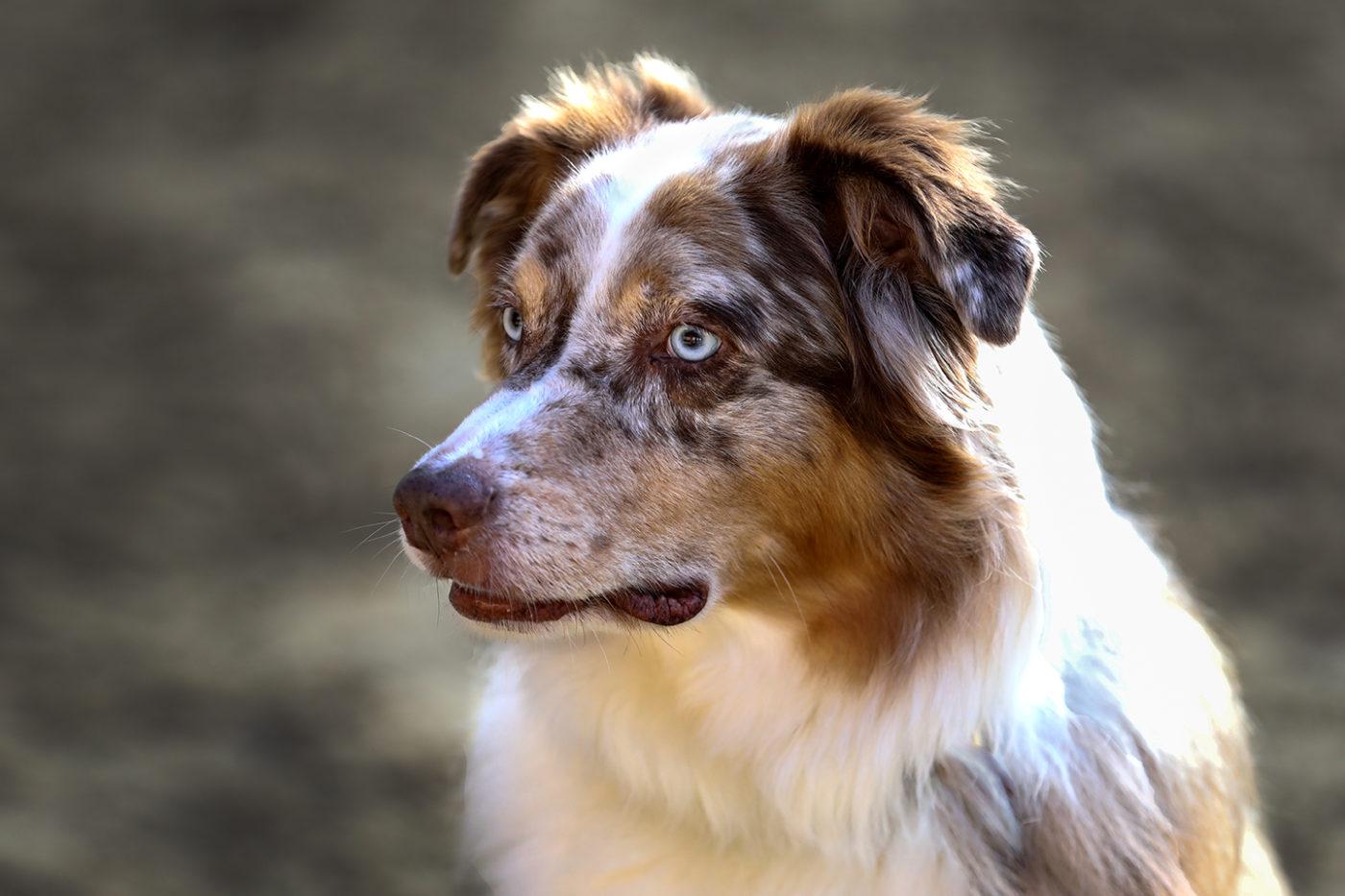 Tierfotografie /Hundefotografie