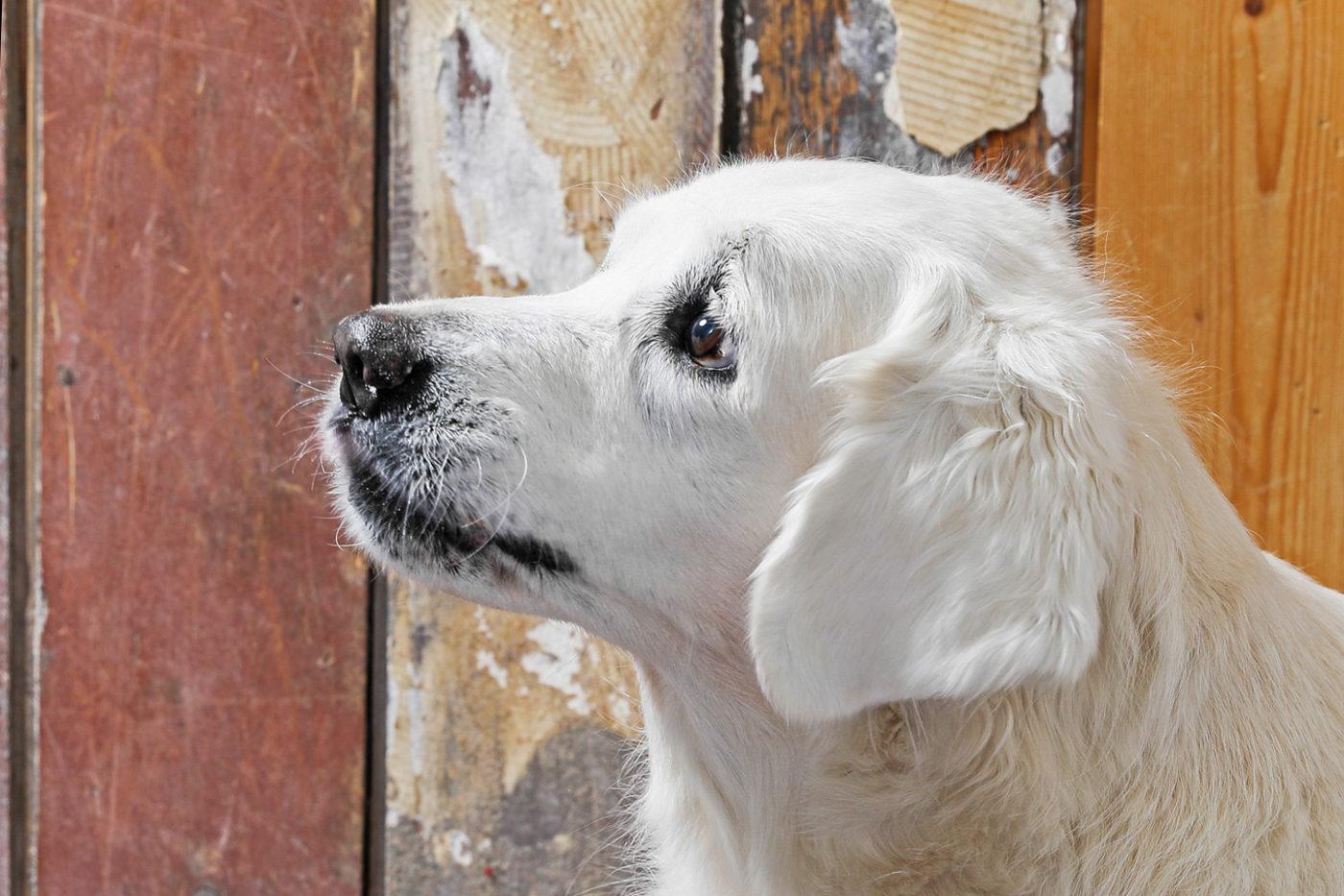 Tierfotografie/Hundefotografie